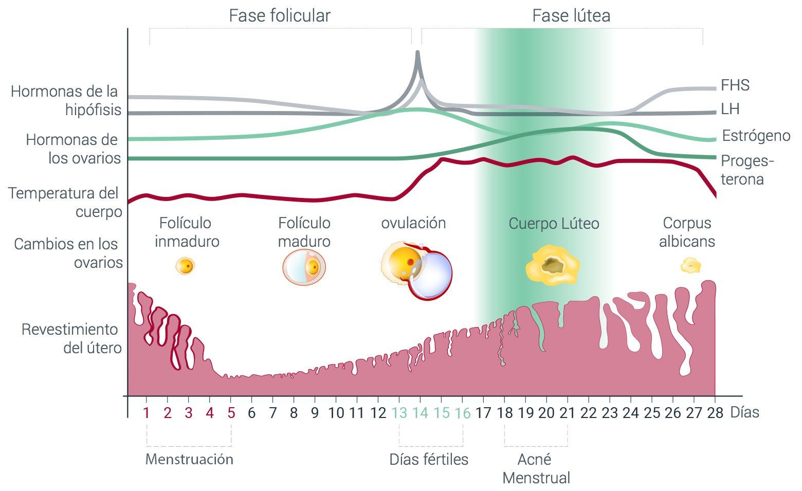 El acné y las hormonas - Cómo afectan las hormonas a la piel