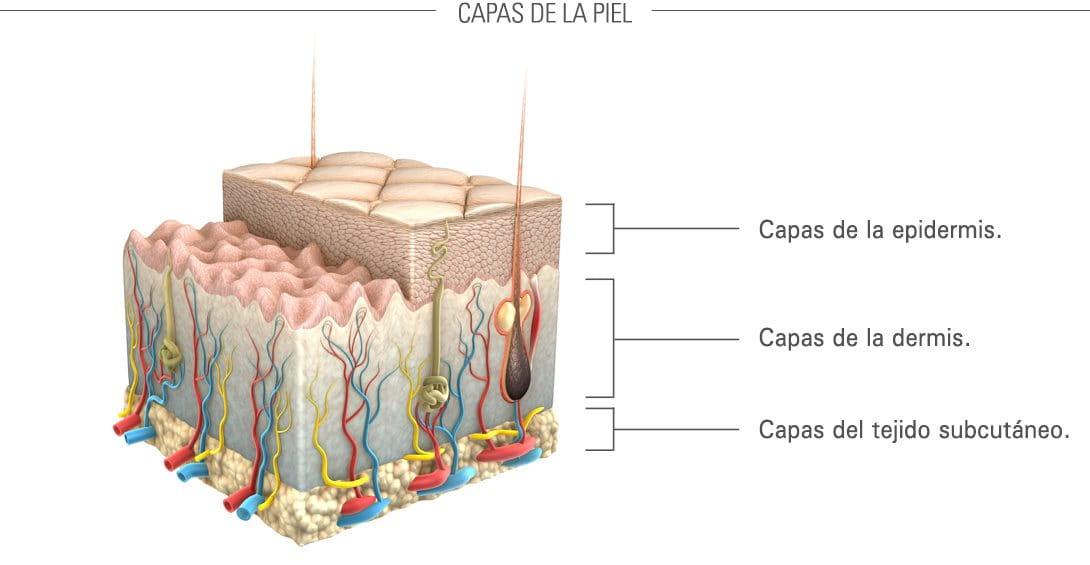 Eucerin: Envejecimiento de la piel | Envejecimiento de la piel en ...